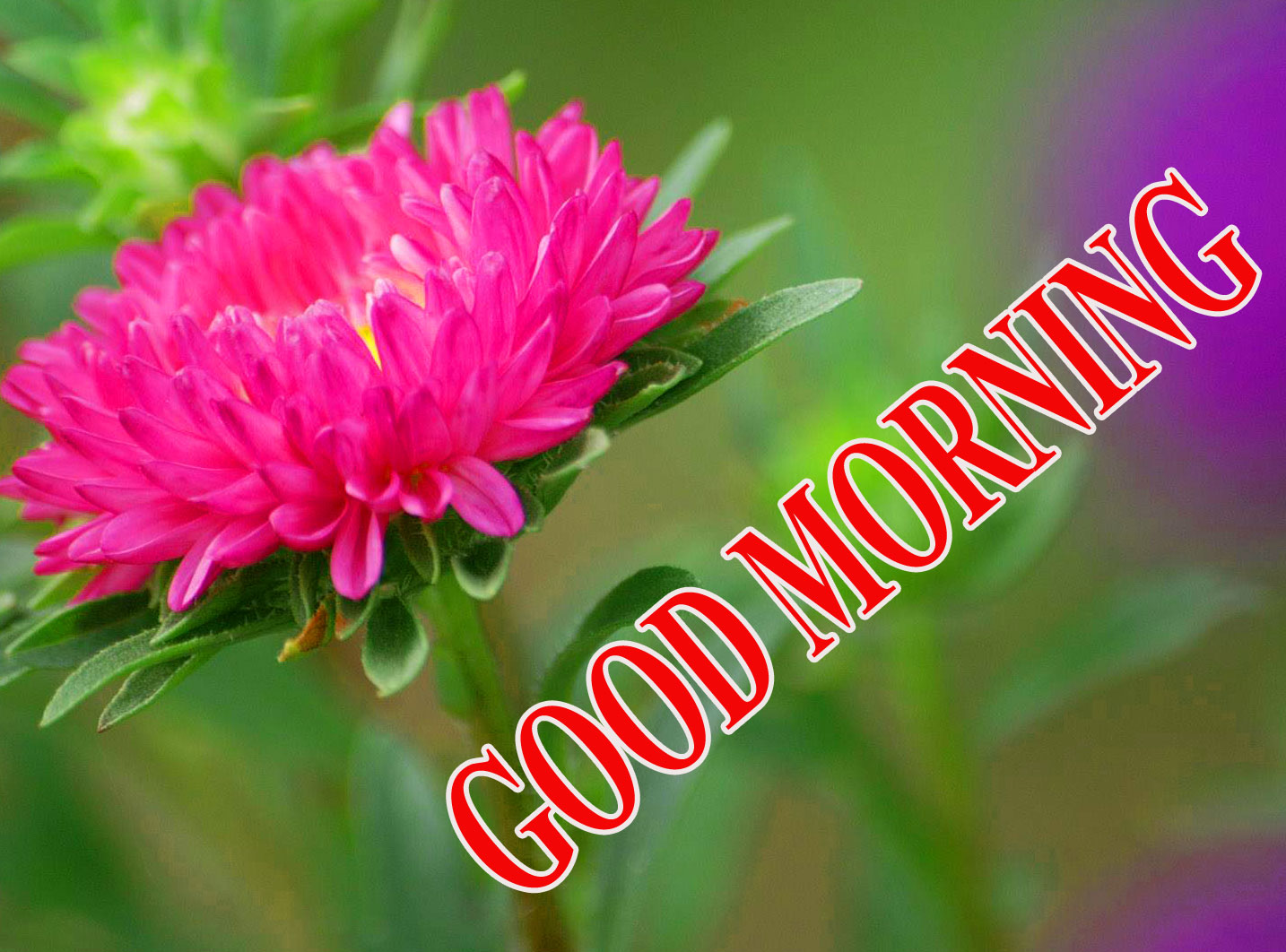 BEAUTIFUL LATEST AMAZING ALL GOOD MORNING WISHES IMAGES PHOTO WITH FLOWER