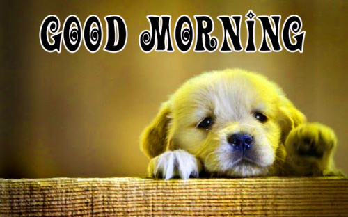 puppies good morning Images Photo for Whatsapp