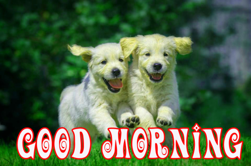 puppies good morning Images Pics Pictures Wallpaper HD