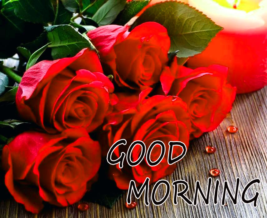GOOD MORNING IMAGE WITH BEAUTIFUL FLOWERS NATURE PIC WITH RED ROSE
