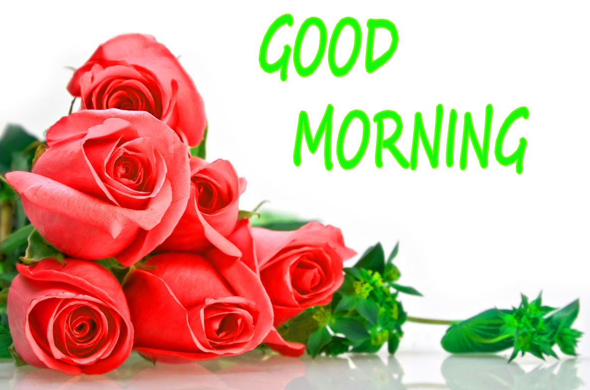 GOOD MORNING IMAGE WITH BEAUTIFUL FLOWERS NATURE WALLPAPER WITH RED ROSE
