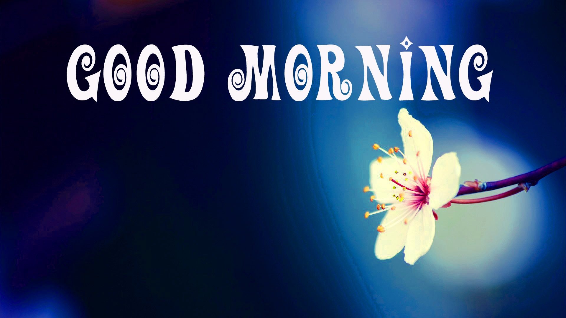 177+ Good Morning Flowers Quotes Wishes Images Wallpaper Photos