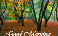 नेचर गुड मॉर्निगं – Beautiful Nature Good Morning Pics Photo HD Download