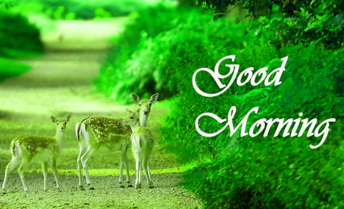 NATURE GOOD MORNING PICS IMAGES PICTURES PHOTO DOWNLOAD
