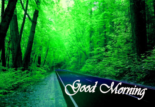 NATURE GOOD MORNING PICS IMAGES PHOTO PICS FREE DOWNLOAD