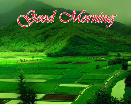 NATURE GOOD MORNING PICS IMAGES WALLPAPER PICS FOR FACEBOOK