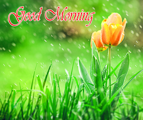 NATURE GOOD MORNING PICS IMAGES WALLPAPER PICTURES FREE