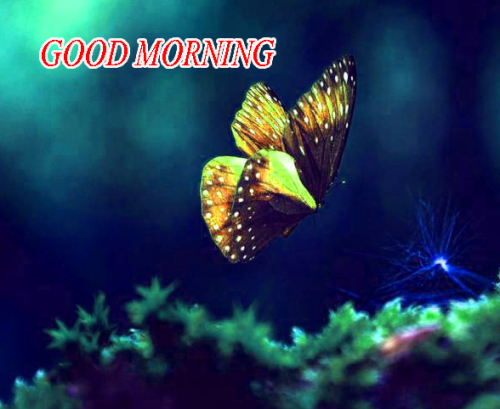 NATURE GOOD MORNING PICS IMAGES WALLPAPER PICS DOWNLOAD