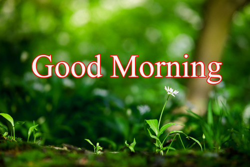 GOOD MORNING DESIGN IMAGES PHOTO FOR FRIEND