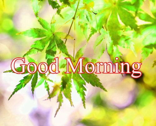 GOOD MORNING DESIGN IMAGES PHOTO PICS DOWNLOAD