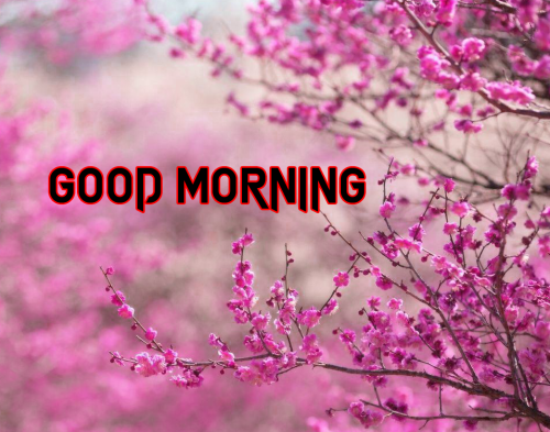 GOOD MORNING DESIGN IMAGES PHOTO FOR FACEBOOK