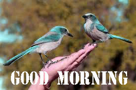 GOOD MORNING HD IMAGES PICTURES WALLPAPER HD DOWNLOAD