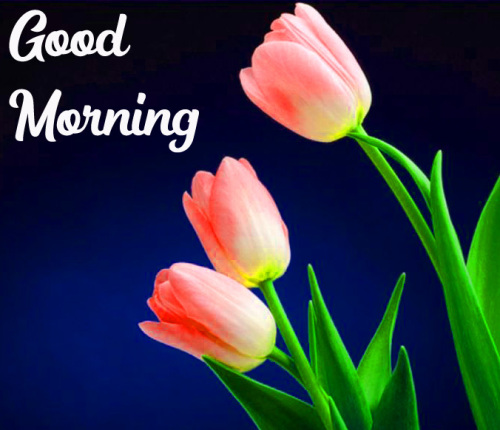 GOOD MORNING HD IMAGES PICTURES WALLPAPER HD