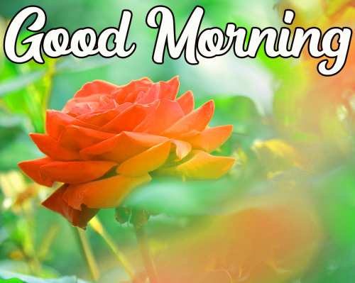 GOOD MORNING HD IMAGES PHOTO WALLPAPER FREE DOWNLOAD FOR FACEBOOK