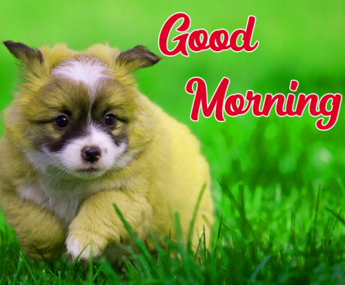 GOOD MORNING HD IMAGES PICTURES WALLPAPER DOWNLOAD