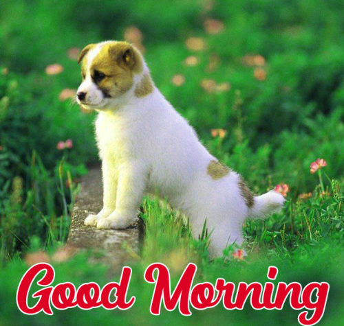 GOOD MORNING HD IMAGES PICTURES WALLPAPER PHOTO DOWNLOAD