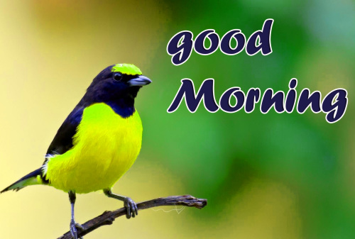 GOOD MORNING HD IMAGES WALLPAPER PHOTO FREE DOWNLOAD