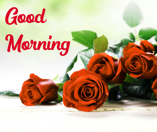 GOOD MORNING HD IMAGES PICTURES PHOTO HD DOWNLOAD