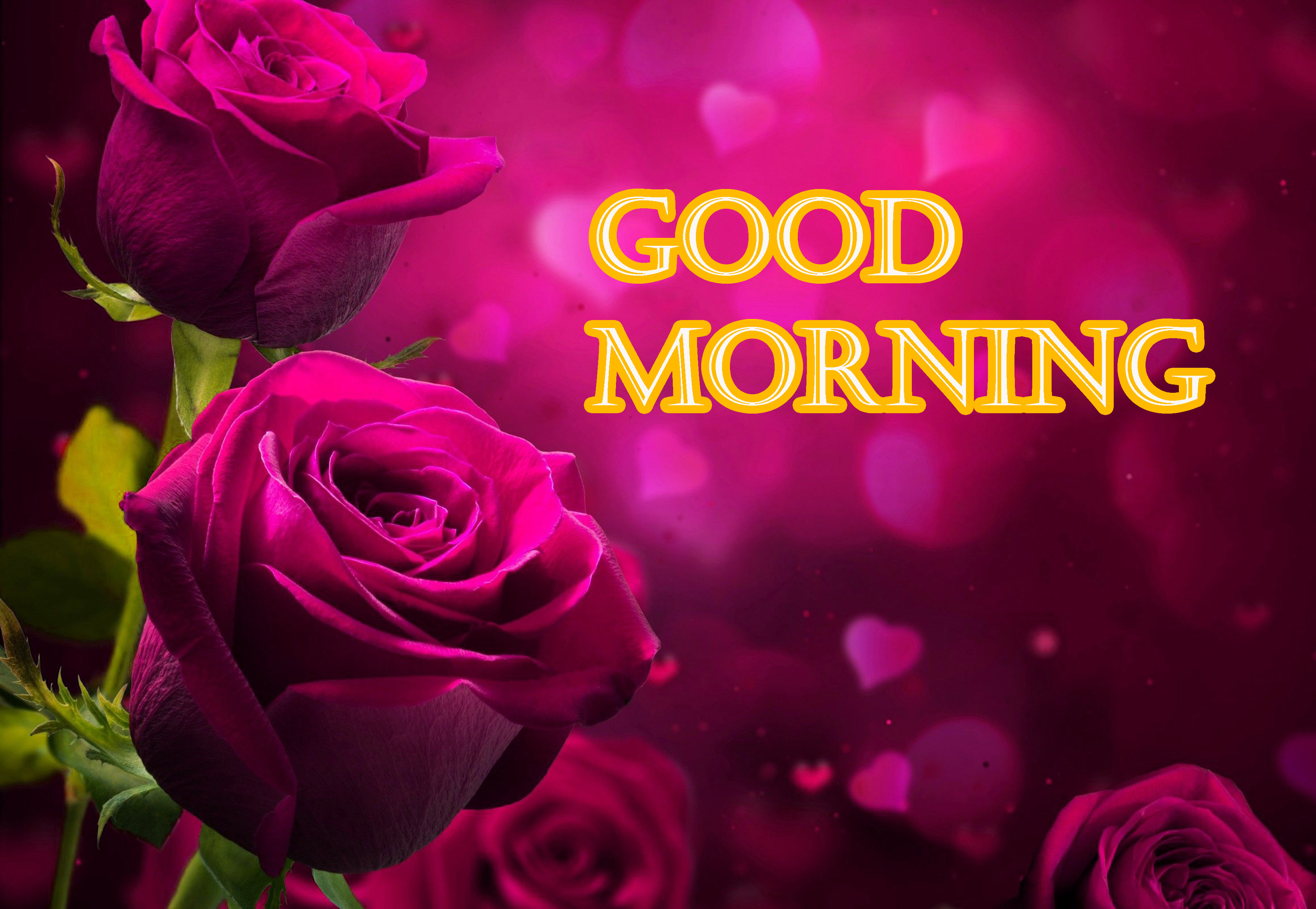 GOOD MORNING IMAGE PICTURES WALLPAPER FOR FACEBOOK