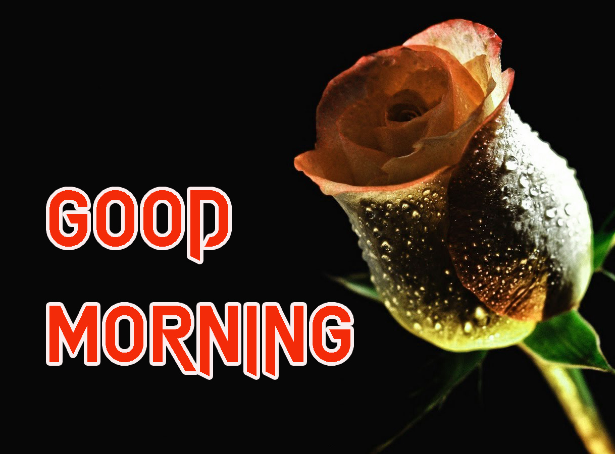 GOOD MORNING IMAGE PHOTO WALLPAPER FREE DOWNLOAD