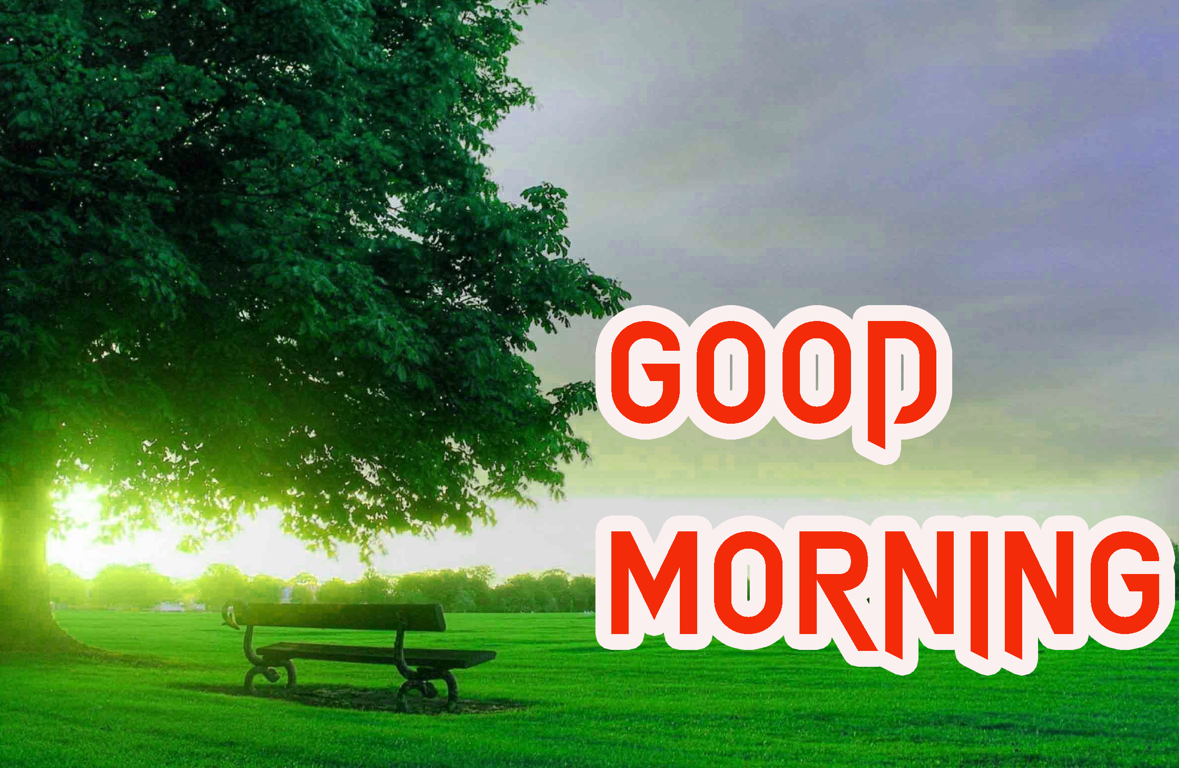 GOOD MORNING IMAGE PHOTO WALLPAPER FREE HD DOWNLOAD
