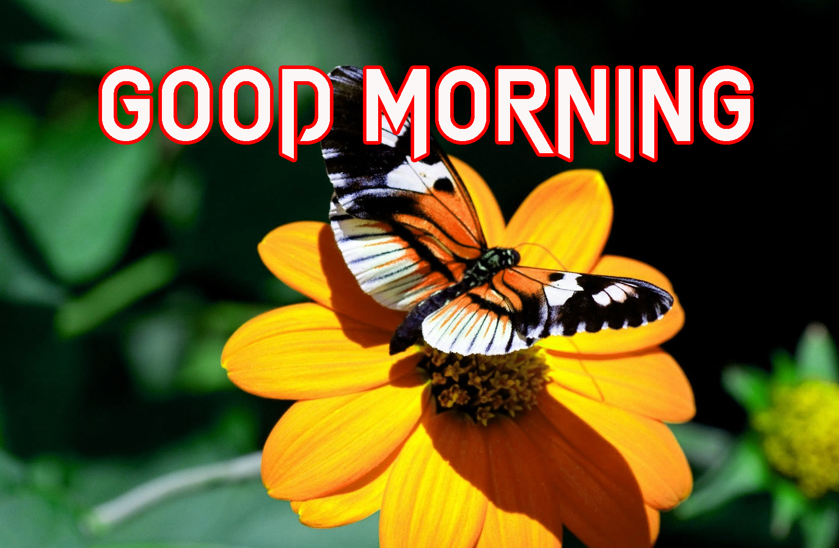 GOOD MORNING IMAGE PHOTO WALLPAPER DOWNLOAD