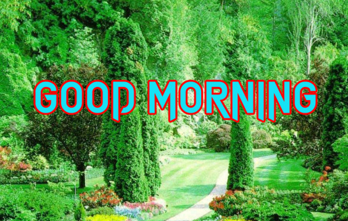 GOOD MORNING IMAGES WALLPAPER PICS PICTURES FOR WHATSAPP