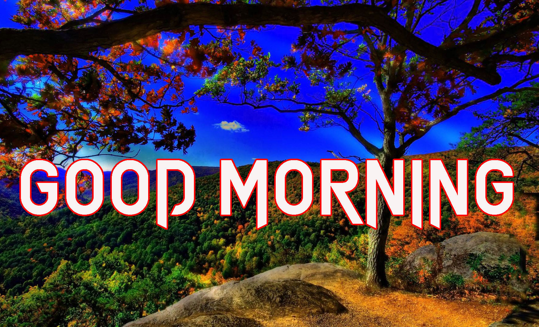 GOOD MORNING IMAGES WALLPAPER PICTURES FREE HD DOWNLOAD
