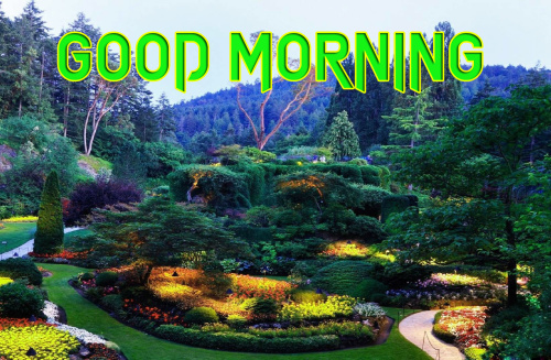 GOOD MORNING IMAGES  PICS WALLPAPER PICTURES HD