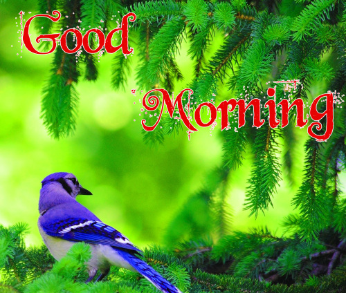 GOOD MORNING IMAGES WALLPAPER PHOTO FOR GIRLFRIEND