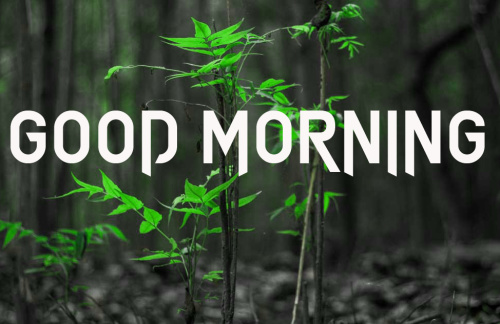 GOOD MORNING IMAGES  PICS PHOTO HD DOWNLOAD