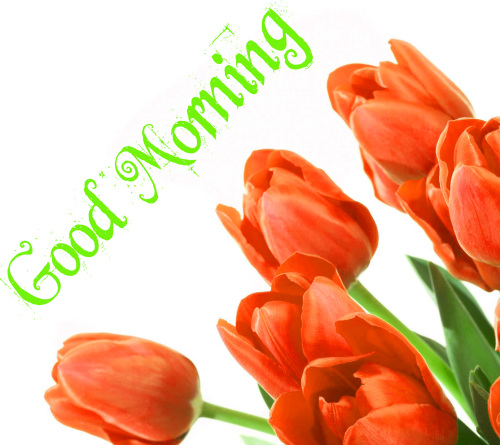 GOOD MORNING IMAGES PHOTO WALLPAPER FOR FACEBOOK