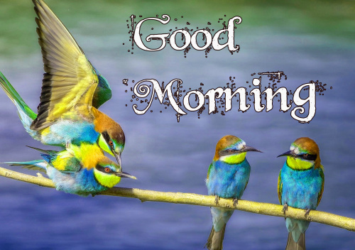 GOOD MORNING IMAGES PICTURES PICS FREE HD DOWNLOAD