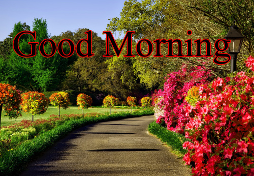 GOOD MORNING IMAGES FOR INDIAN BOYS & GIRLS & ALL FRIENDS PHOTO PICS DOWNLOAD