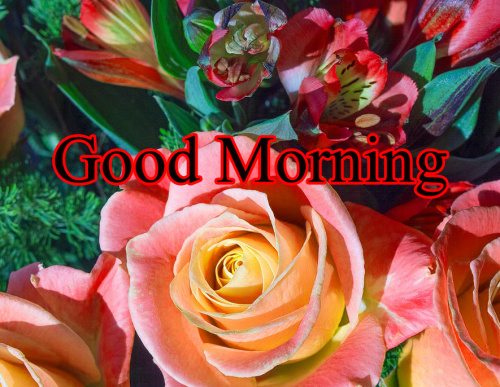 GOOD MORNING IMAGES FOR INDIAN BOYS & GIRLS & ALL FRIENDS PHOTO WALLPAPER FREE HD