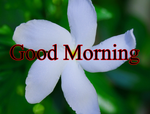 GOOD MORNING IMAGES FOR INDIAN BOYS & GIRLS & ALL FRIENDS WALLPAPER DOWNLOAD