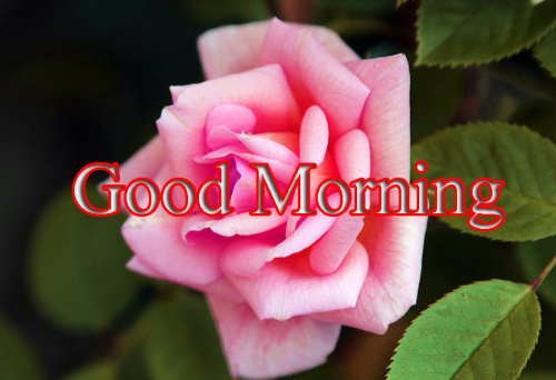 GOOD MORNING IMAGES FOR INDIAN BOYS & GIRLS & ALL FRIENDS PHOTO HD