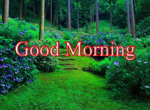 GOOD MORNING IMAGES FOR INDIAN BOYS & GIRLS & ALL FRIENDS PHOTO PICS HD