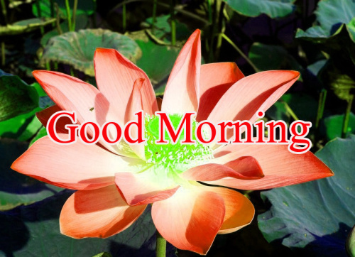 GOOD MORNING IMAGES FOR INDIAN BOYS & GIRLS & ALL FRIENDS PHOTO DOWNLOAD