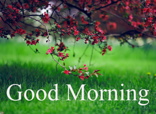 GOOD MORNING IMAGES FOR INDIAN BOYS & GIRLS & ALL FRIENDS PICTURES PHOTO FREE HD DOWNLOAD