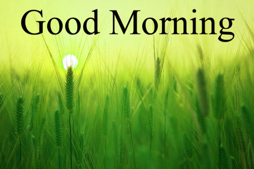GOOD MORNING IMAGES FOR INDIAN BOYS & GIRLS & ALL FRIENDS PICTURES PICS FREE HD