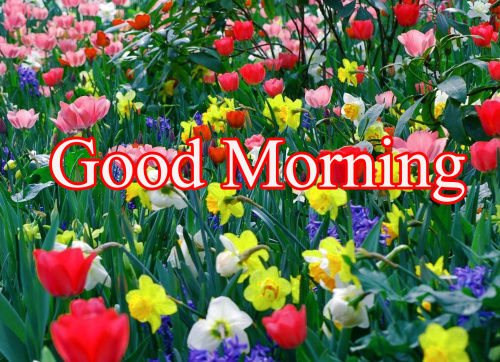 GOOD MORNING IMAGES WITH TEACHERS DAY PHOTO PICS HD