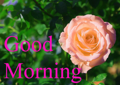GOOD MORNING IMAGES WITH TEACHERS DAY WALLPAPER PHOTO DOWNLOAD