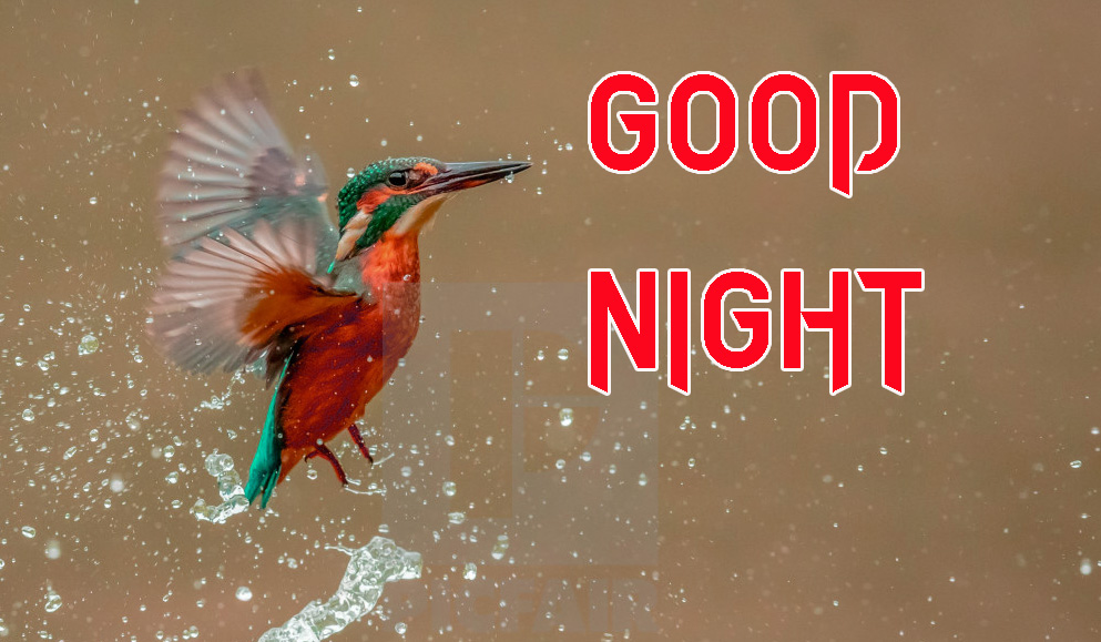 GOOD NIGHT IMAGES  PHOTO FOR WHATS APP