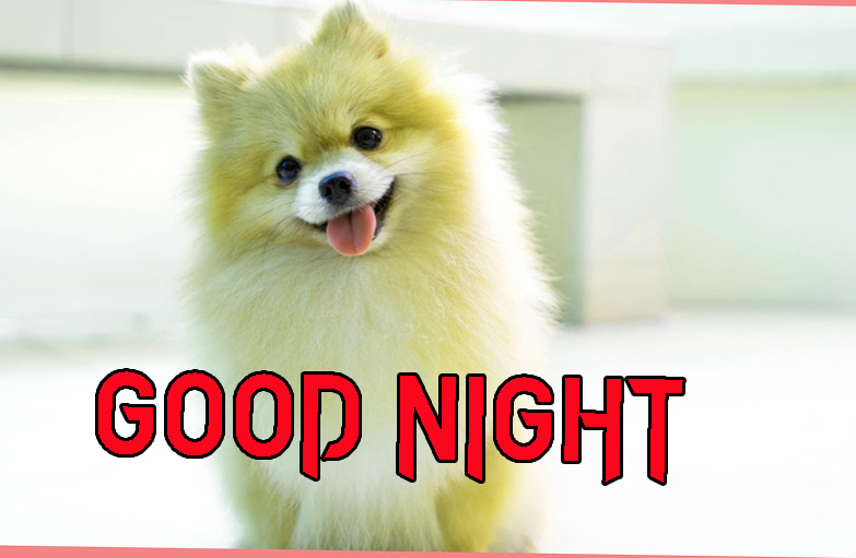 GOOD NIGHT IMAGES  PICTURE PICS DOWNLOAD