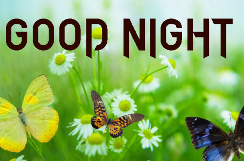 GOOD NIGHT IMAGES PHOTO PICS PICTURES FREE HD