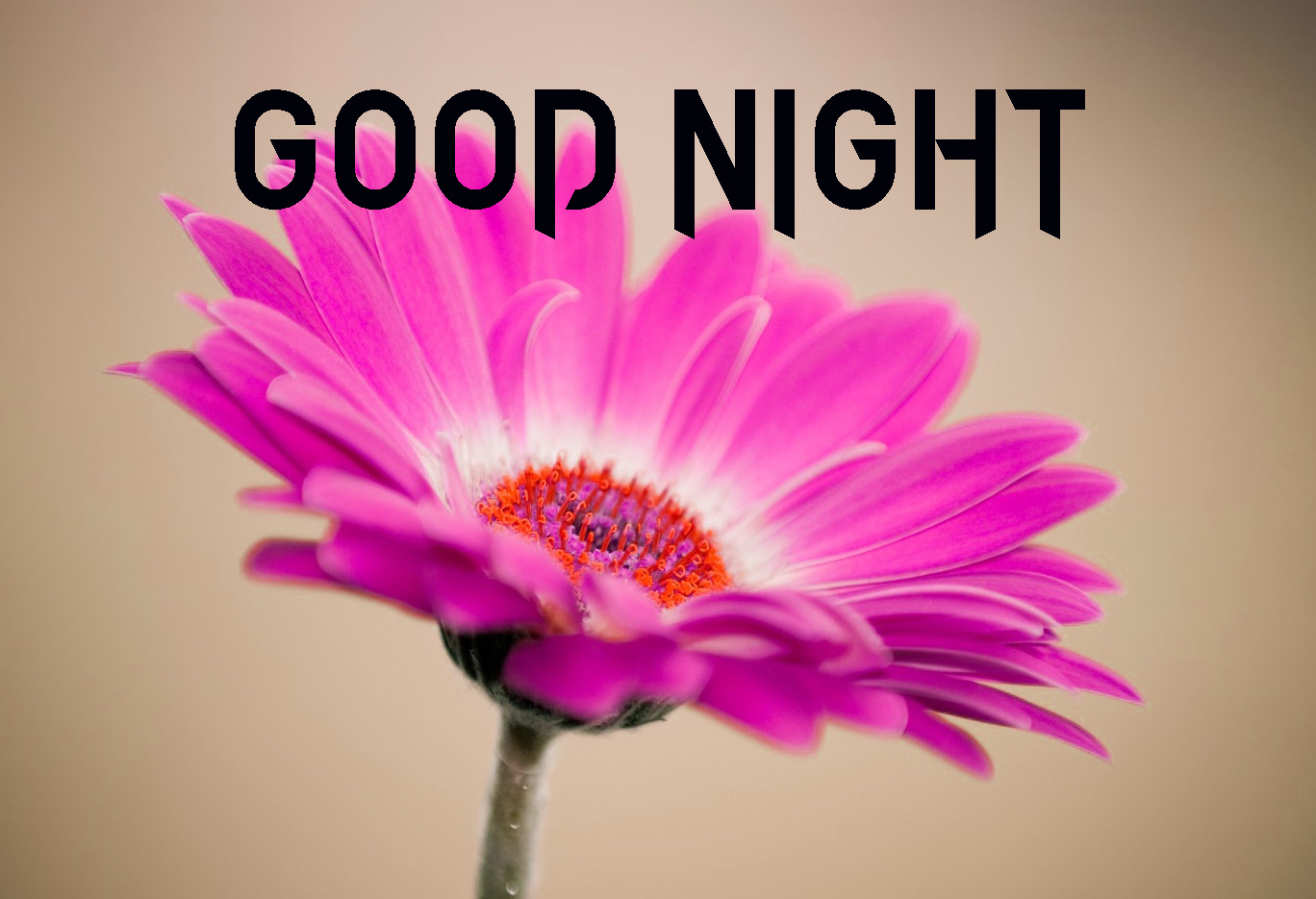 GOOD NIGHT IMAGES FOR LOVER / LOVE COUPLE  IMAGES  PICS WALLPAPER FREE DOWNLOAD