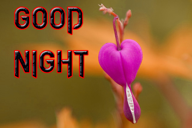 GOOD NIGHT IMAGES FOR LOVER / LOVE COUPLE  IMAGES  WALLPAPER PICS DOWNLOAD
