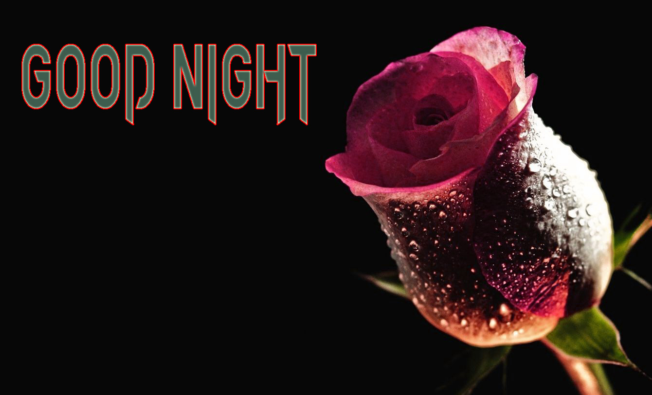 GOOD NIGHT IMAGES FOR LOVER / LOVE COUPLE  IMAGES PICTURES WITH RED ROSE