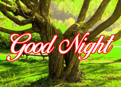 GOOD NIGHT IMAGES WALLPAPER PHOTO PICS FREE HD DOWNLOAD